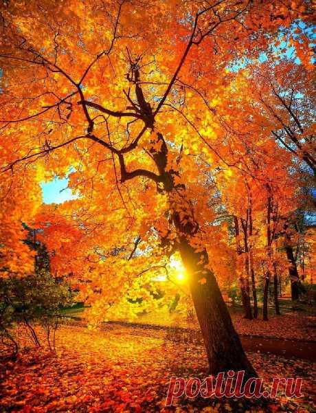 •• Цвет настроения ...Осень