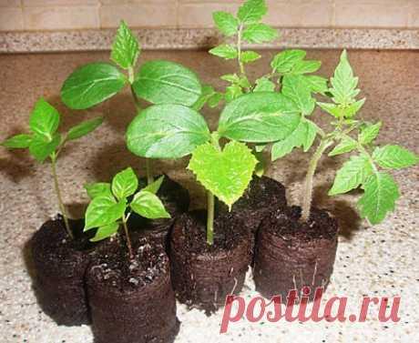 8 овощей, которые можно с лёгкостью выращивать дома