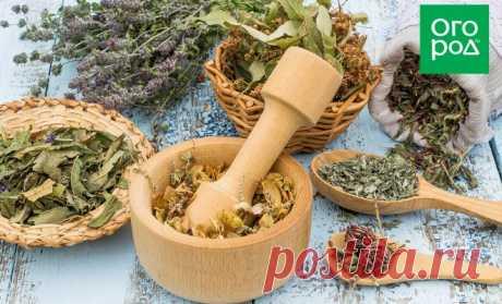 Растения-антидепрессанты, которые стоит посадить на даче   Полезно (Огород.ru)