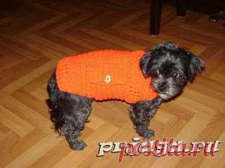 Одежда для собак крючком – свитер с карманами