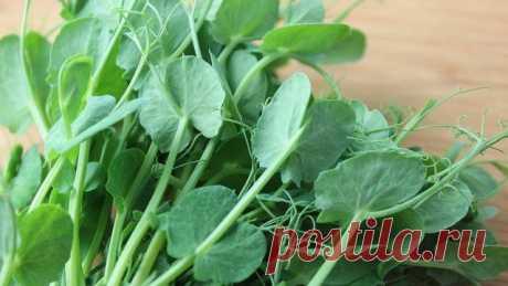 9 быстрорастущих растений для весеннего огорода | 6 соток