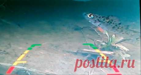 Камера заднего вида для рыбалки | AvtoTechLife | Яндекс Дзен