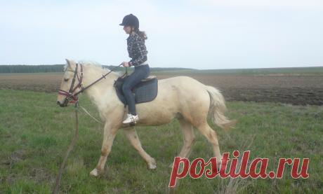 Ненужная статья о том, как правильно сидеть на лошади | Интересно о лошадях | Яндекс Дзен
