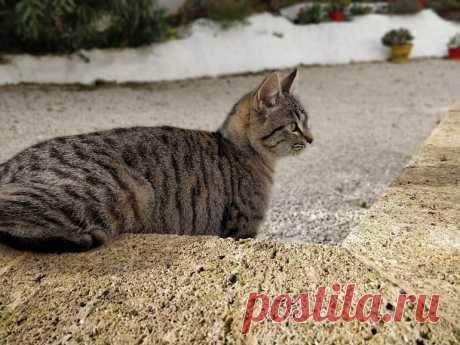 Votre chat vous agace ? Des chercheurs ont créé cette musique pour le calmer - CNET France Cette musique composée spécialement pour les chats par des scientifiques de l'université de Louisiane pourrait surtout rendre la visite chez le vétérinaire moins compliquée.