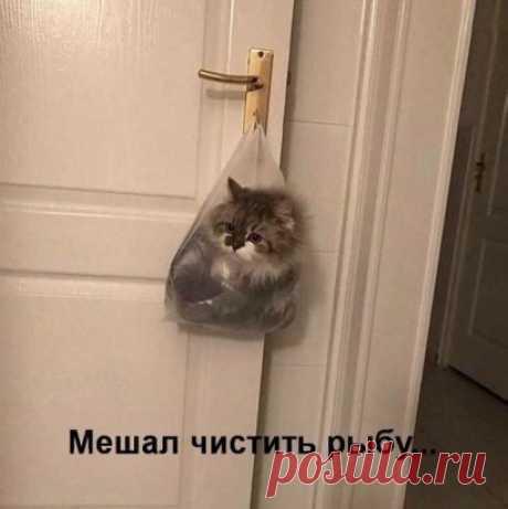 Классный котик