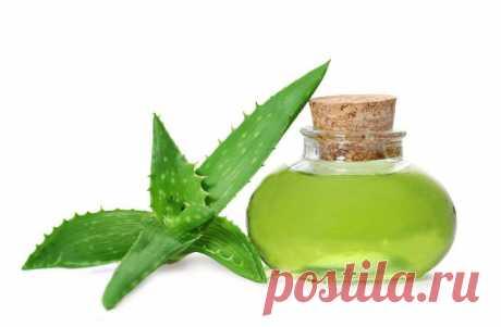 Чудо растение, которое лечит экзему, псориаз, дерматит и другие аллергические реакции кожи - Советы и Рецепты