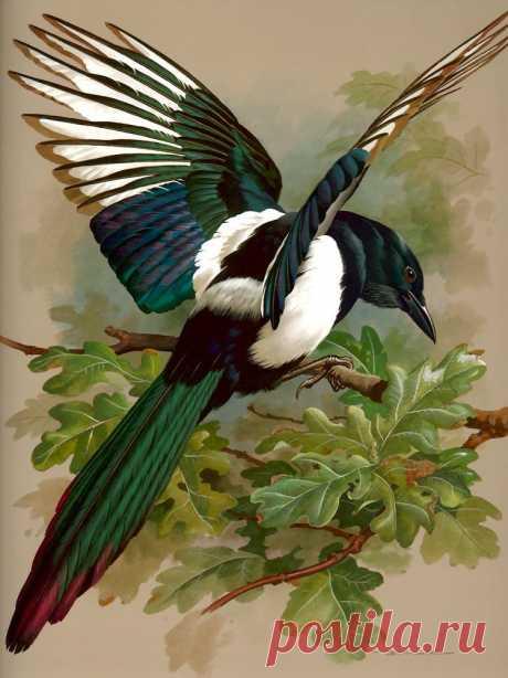 Базиль Эде и его прекрасные картины птиц