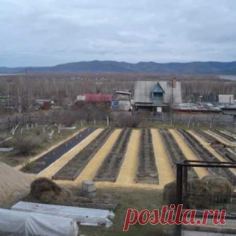 Узкие грядки. Секрет удивительного урожая Игоря Лядова - МирТесен