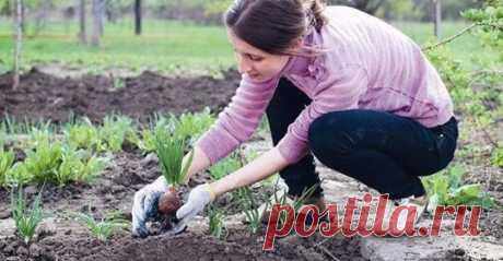 Когда нельзя сажать и сеять. Народные приметы для садоводов-огородников! - Все самое интересное! — Картофель нельзя сажать на Вербной неделе, по средам и субботам —...