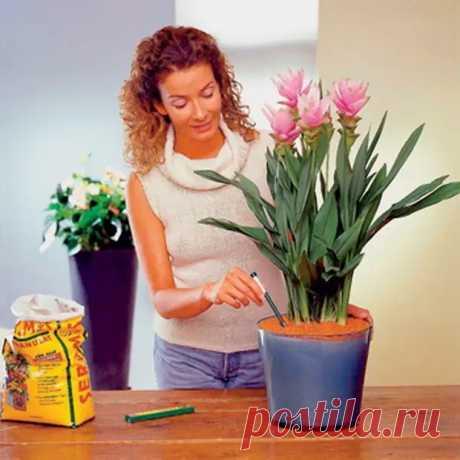 Как ухаживать за комнатными цветами: правильный уход за домашними растениями - Цветочки - медиаплатформа МирТесен