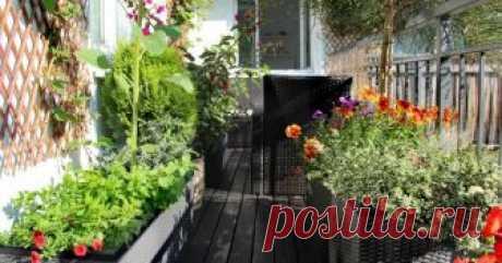 Растения для южного балкона – какие посадить и как за ними правильно ухаживать Из земельных угодий в вашем хозяйстве только балкон, да и тот летом похож на филиал пустыни? Прекрасный оазис можно создать и на нем, нужно лишь правильно подобрать растения и ухаживать за ними.