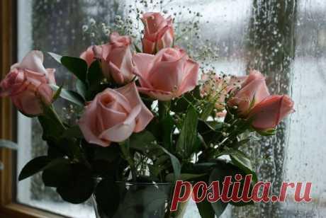 Цветы на фото для вас