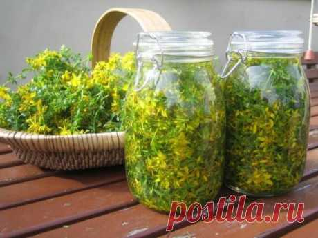 Лекарственные травы для лечения печени — МАКЛУША Печень это единственный орган, способный восстанавливаться! Лучше всего поддержать печень помогут эти лекарственные травы.