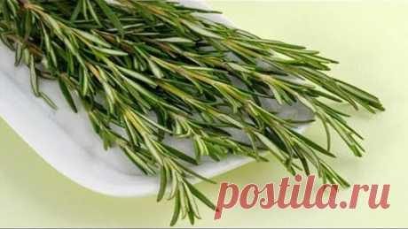 Самая мощная трава для сердца, сосудов, надпочечников и не только!!