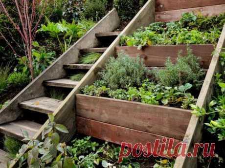 Идея для сада — больше пряных трав
