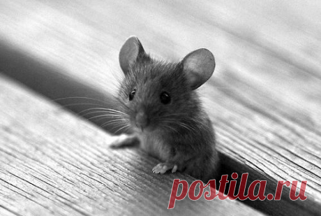 Милая маленькая мышка - Альбом на Imgur