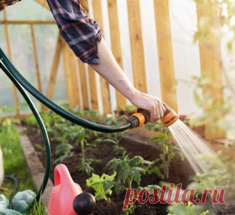 5 правил ухода за садом и огородом в жару Узнаем, как правильно ухаживать за садом и огородом в летнюю пору года, когда погода оказывается слишком жаркой.