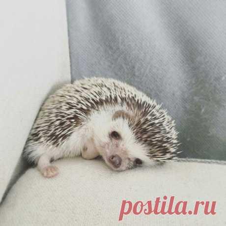 Mood: sad hedgehog