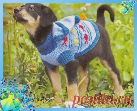 Вяжем одёжку для собачонки из категории Интересные идеи – Вязаные идеи, идеи для вязания