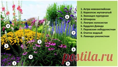 Малоуходовый цветник для солнечного места: схема и растения