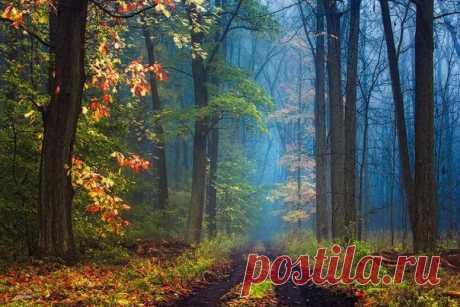 Магия осеннего леса в фотографиях Янека Седлара - Путешествуем вместе