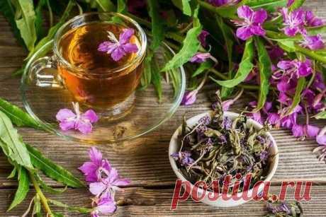 Иван-чай - лечебные свойства и противопоказания, народные рецепты.
