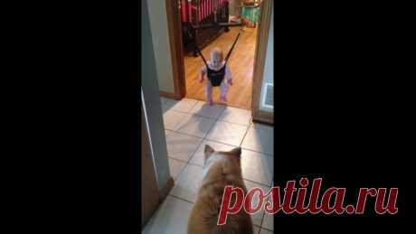 собака учить ребёнка кататься