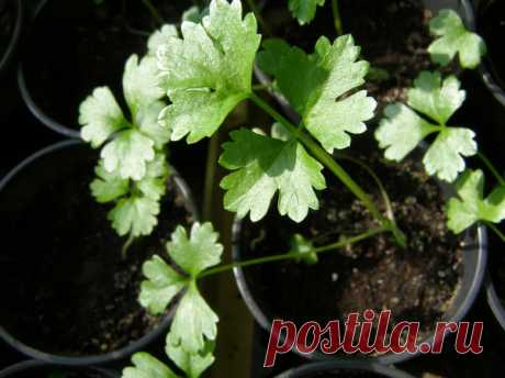 Seedling in February: here what it is time to sow