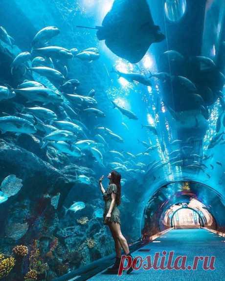 Дубайский океанариум, ОАЭ.
