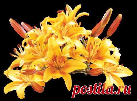 Клипарт Желтые цветы.
