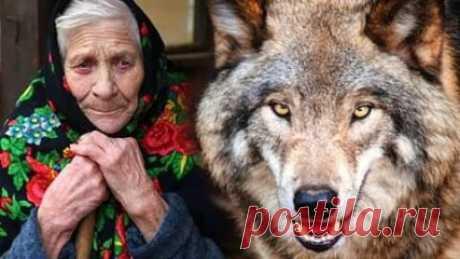 Бабушка Тамара однажды сильно заболела и её внучка, тоже Тамара - восемнадцатилетняя питерская студентка, отодвинула все дела и примчалась спасать бабушку. Доживала бабушка в тридцати километрах от Москвы, в выцветшем деревянном домике, ещё довоенной постройки. Огородик, колодец, навес, под которым дед хранил битые кирпичи и ржавые колёса от Москвича. Все это выглядело довольно грустно и безнадёжно. А ведь когда-то, когда Тома приезжала сюда в детстве и дедушка был ещё жив...