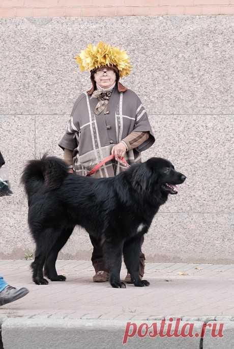Монголдог Адис Алмазик и я.