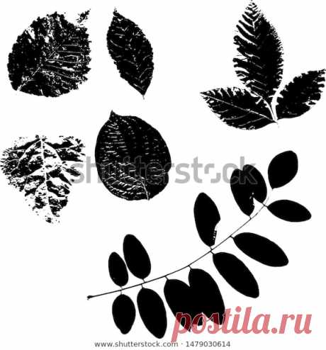 Leaves from the trees. Stock Vector Illustration.