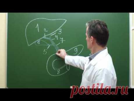 Схема внепеченочных желчных путей