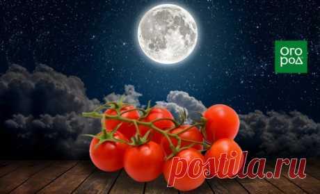 Выращивание томатов по Лунному календарю в 2021 году | На грядке (Огород.ru)
