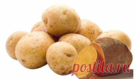 Лечимся картошкой