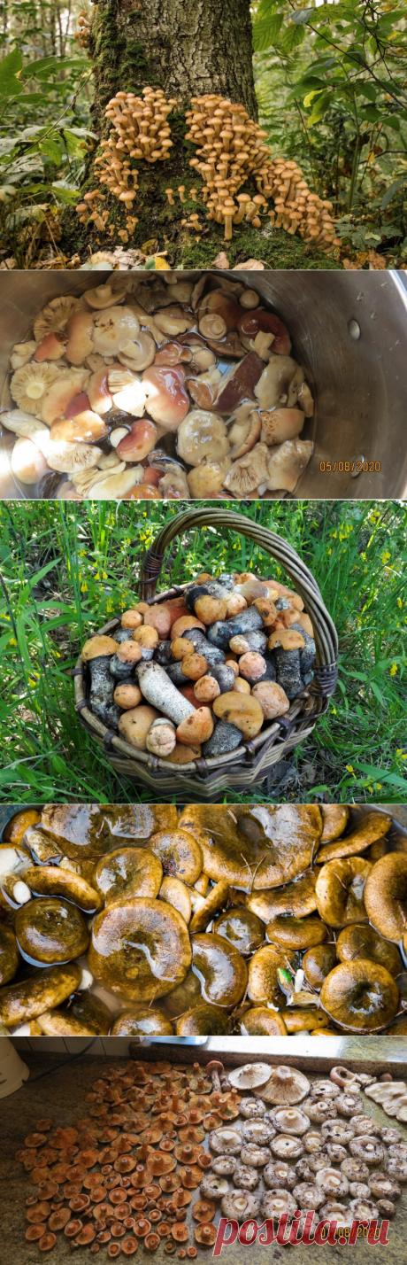 Переработка грибов: бессмысленные привычки, крадущие наше время.