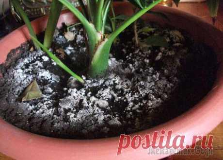 Как убрать белый налет на почве в цветочных горшках