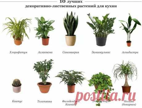 Растения для кухни - Садоводка