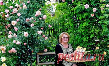 """Почему гибнут молодые розы: самые частые причины неудачного старта    Порой цветоводы отказываются от посадки садовых роз, считая эти """"королевские"""" растения капризными. А ведь нужно просто знать несколько нюансов ухода за ними, и тогда розы запросто и в короткий срок…"""