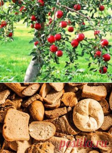 Хлебная подкормка для хорошего урожая
