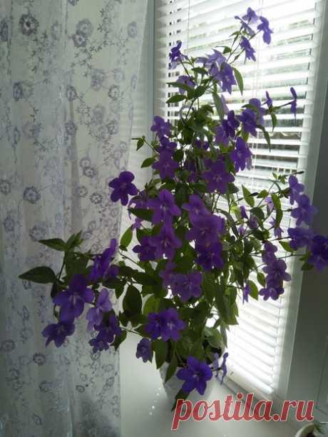Подскажите,пожалуйста,название цветка?