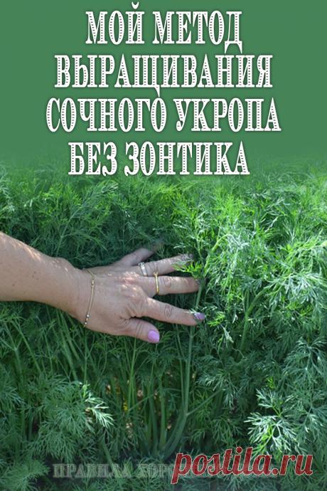 #дача #вырастить #укроп #без #зонтика