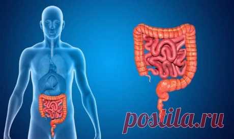 У вас синдром раздраженного кишечника – что делать и как лечить