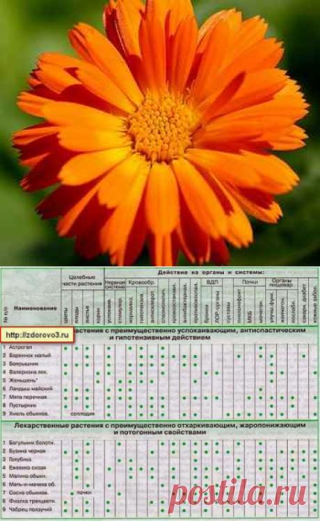 Лекарственные растения (лечение заболеваний)