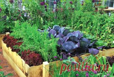Признаки недостатка или избытка питательных веществ у растений — 6 соток