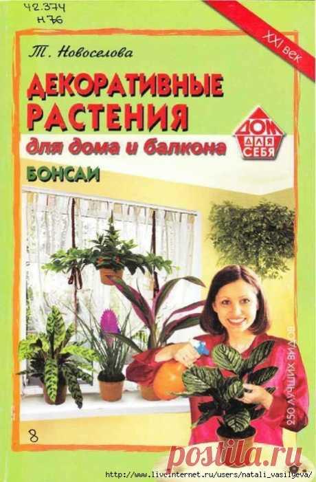 Ornamental plants for the house and a balcony. Bonsais