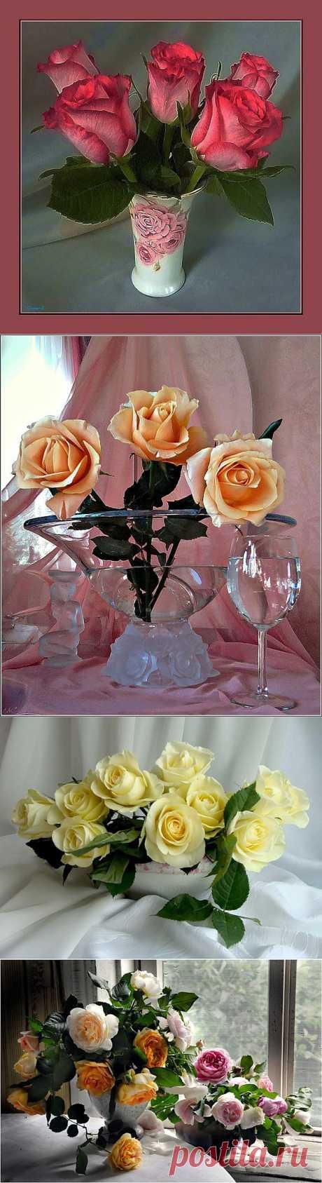 Натюрморты Шикарные розы.