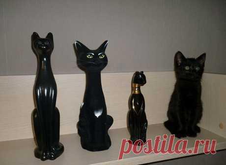9 фото котов, которые мастерски играют в прятки. Попробуйте их найти