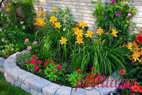 Фотокаталог многолетних цветов для дачи, не требующих ухода | Дачный уход | Яндекс Дзен